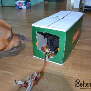 Stafordšírský bulteriér štěně